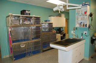 CHARLOTTE STREET ANIMAL HOSPITAL - Asheville, NC